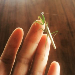 mantid alien