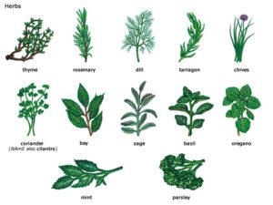 herbs_comp